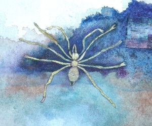 MGlikson_Singing spider_from Dear Safia_video, watercolour, paper_2013